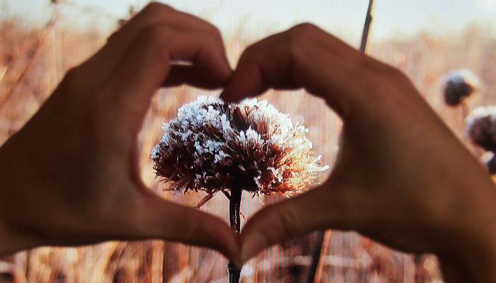 Hello Land. Be My Valentine