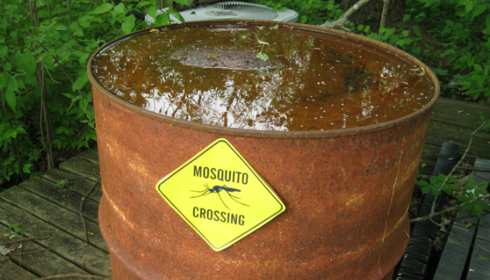 If You Build it, They Will Come – Including Mosquitoes