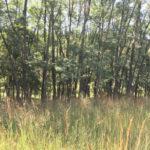 Muddy Creek Preserve acquisition