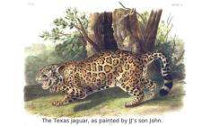 Audubon's Mammals