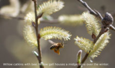 The Unsung Heroes of the Early Pollinators
