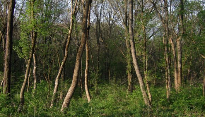 Backyard Forest coming soon: backyard forest conference! - bur oak land trust