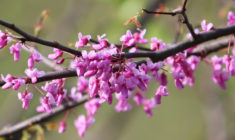 Strategic Flowering