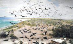Rat Island: A Book Review