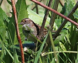 Becoming an Amateur Naturalist Part 1: Getting Started